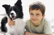 כשזה מגיע לידידו הטוב ביותר של האדם, כלבים מדגישים את הטוב שבטוב. ולא רק הם. אהבה לבעלי חיים יכולה לתרום רבות לשיפור הרווחה הנפשית, הרבה מעבר להנאה מהמראה החינני והיפה […]
